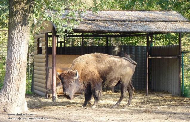 зоопарк Хащевое