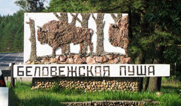 Беловежская пуща Стелла